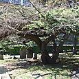 Low Tree