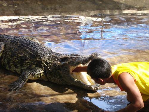 The Siamese Crocodile